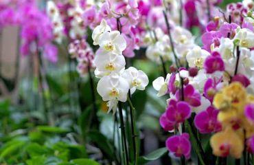 A primavera inicia com exposição de orquídeas no Center Shopping