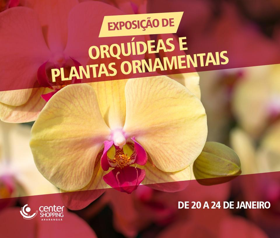 Exposição de Orquídeas e Plantas Ornamentais